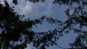 Halo van de vorm die van boombovenkanten rond onweer in blauwe hemel blazen stock videobeelden