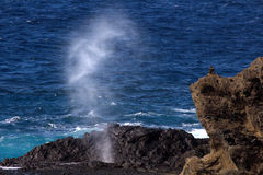 Halona Blowhole Eruption Royalty Free Stock Photos