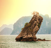 Halong Stock Images
