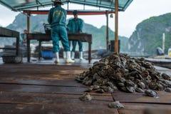 Halong zatoka Wietnam, Kwiecień, - 27, 2018: Ostrygi z powodu Operlają gospodarstwo rolne z pracownikami w tle przy Halong zatoką Zdjęcie Royalty Free