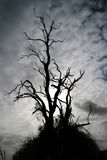 haloween被困扰的结构树 免版税库存照片