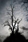Haloween frecuentó el árbol Foto de archivo libre de regalías