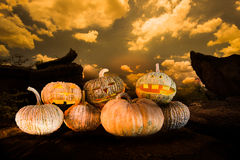 Haloween pumpkins. Pumpkins on the lanscape background for haloween stock photo