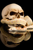 Haloween snake and skull Stock Photos