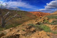 Haloxylon del plateau Ustyurt Fotografie Stock Libere da Diritti