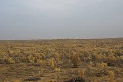 Haloxylon, Gobi, Xinjiang στοκ εικόνες