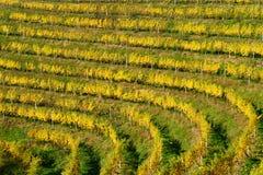 Haloze-Hügel, Weinberge auf Terrassen im Herbst lizenzfreie stockbilder