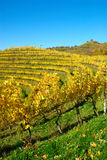 Haloze Hills, Vineyards On Terraces In Autumn Stock Photos