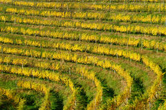 Haloze Hills, Vineyards On Terraces In Autumn Royalty Free Stock Images
