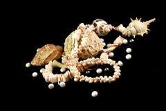 Halsband, koraal, parels en shells op een zwarte achtergrond stock foto's