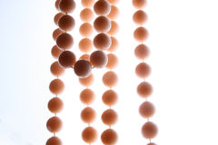 halsbandpink Royaltyfria Bilder