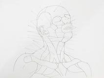 Halsbleistift-zeichnung des menschlichen Gesichtes Lizenzfreies Stockfoto