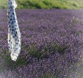Halsduk i lavendelfält Royaltyfria Bilder