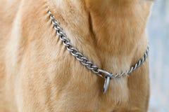 Halskette des Hundes lizenzfreie stockfotos