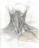 Halsspieren Stock Foto