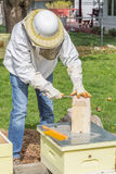 Halten der Bienen Lizenzfreie Stockfotografie