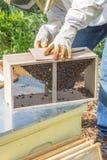Halten der Bienen Lizenzfreies Stockfoto