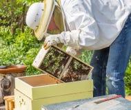 Halten der Bienen Stockfotografie