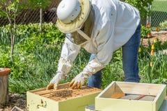 Halten der Bienen Stockfoto