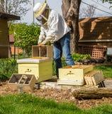 Halten der Bienen Lizenzfreie Stockfotos
