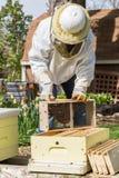 Halten der Bienen Lizenzfreie Stockbilder