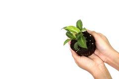 Halten der Grünpflanze in der Hand Stockbilder
