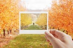 Halten des sofortigen Fotos Lizenzfreie Stockbilder