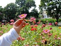 Halten einer Blume im Park Stockfotos