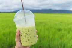 Halten einer Schale Milch greentea am Reisfeld Lizenzfreies Stockbild