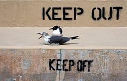 Halten Sie ab und halten Sie weg vom Zeichen auf einem Uferdamm mit Seemöwen Lizenzfreie Stockfotos
