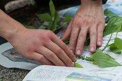 Halten Sie Anlage für Waldherbarium stockbilder