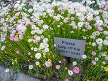 'Halten Sie bitte weg von einem Warnzeichen des Quadrats der Gartenbetten auf einem wilden botanischen Garten des weißen Gänseblü stockbilder