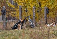 Halten Sie Hunde auf dem Übungsfeld instand Stockfoto