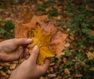 Halten von Blättern im Park stockfotos