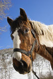 Halter s'usant de cheval Image stock