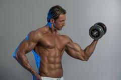 Halterofilista que exercita o bíceps com pesos em Grey Background Fotografia de Stock Royalty Free