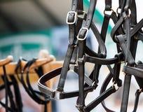 Halters αλόγων στο στάβλο αγοράς Στοκ Εικόνες