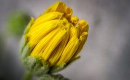 Halv blomblomma Arkivfoton