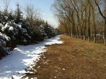 Halv höst, halv vinter, grafiska träd för konstigt fenomen och landskap på gatan arkivbilder