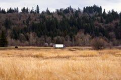 Halv lastbil på vägen mellan det gula gräset och den gröna kullen Arkivbilder