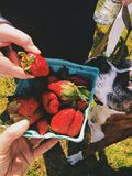 Halv liter av nya jordgubbar Arkivfoto