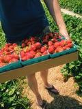 Halv liter av nya jordgubbar Arkivfoton