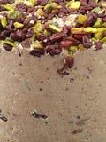 Halva με τα καρύδια, Μεσο-Ανατολικό γλυκό Στοκ Φωτογραφίες