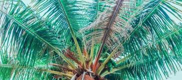 Halva av överkanten av en palmträd royaltyfri foto