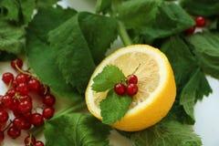 Halva av citronen med den röda vinbäret och mintkaramellen fotografering för bildbyråer