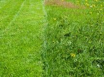 Halva av mejad gräsmatta för grönt gräs Royaltyfria Bilder
