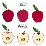 Halva av röda Apple och hela Apple och blad Ny frukt näring bantar Höst eller samling för nedgånggrönsakskörd Realistiska mummel Fotografering för Bildbyråer