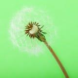 Halva blåst blowball Fotografering för Bildbyråer