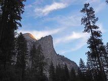 Halva-kupolen och sörjer träd, den Yosemite nationalparken Royaltyfri Foto