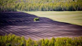 Halva-plogat fält som omges av skogen royaltyfri fotografi